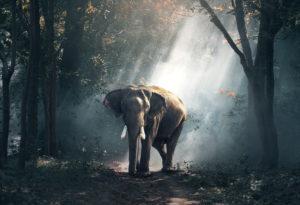 Unternehmensverantwortung - Bild zeigt Elefant im Wald, Rettung Naturschutz.