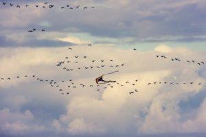 Drachen fliegen durch die Luft.