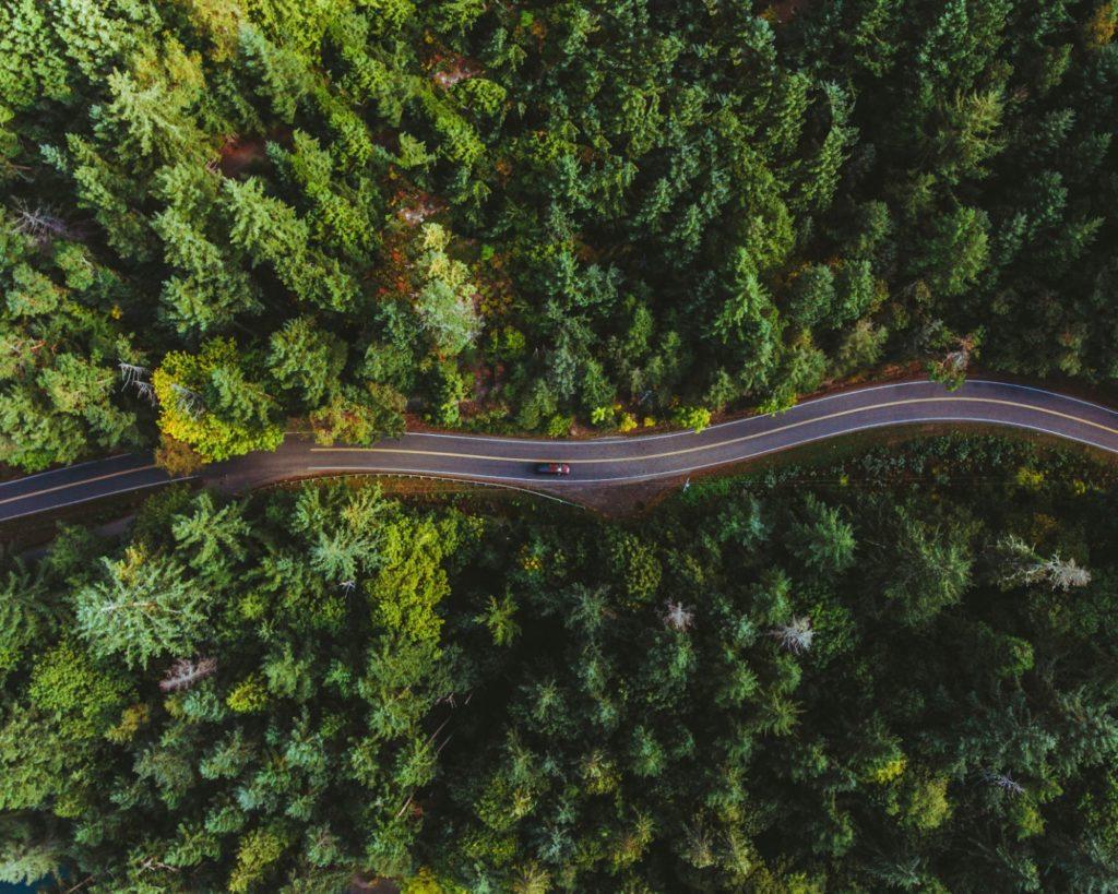 Bild zeigt eine Straße durch den Wald. Titelbild für itstime Ausbildung Organisationsentwicklung Mastering Complexity